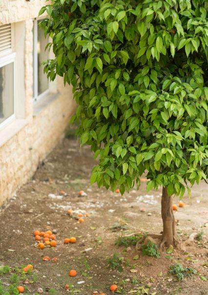 apelsinid pargis
