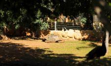 see kilpkonn võib elada üle 250 aasta vanaks. ja ta isegi liikus ringi :)