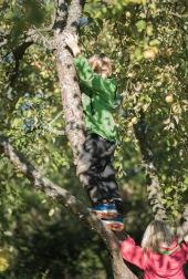 Vanaema õunapuu otsas